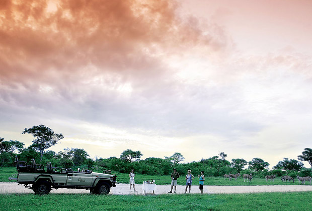 sabi-sands-game-drive-safari