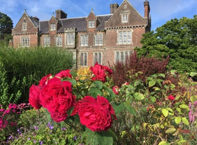 Roses at Wells