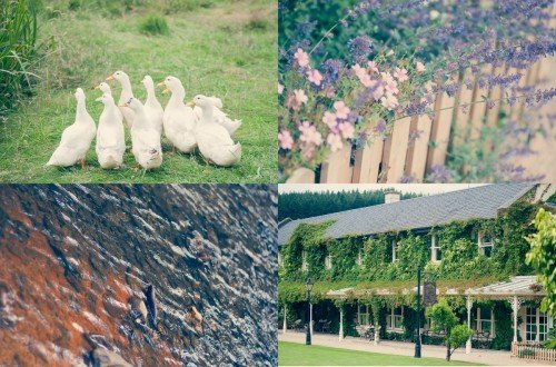 details, wedding, venue Brooklodge, brooklodge, ducks, flowers, lake, colourfull