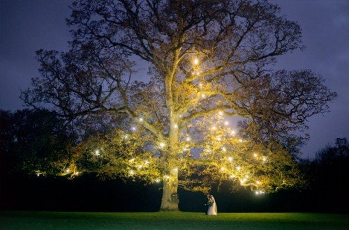 rathsallagh, tree, night-time, lights, dark, fairy, lights, photography, colourfull, fun, natural, winter