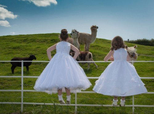 Flowergirls looking at resident Alpacas at Clanard Court Hotel